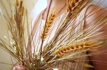 virgo-with-wheat