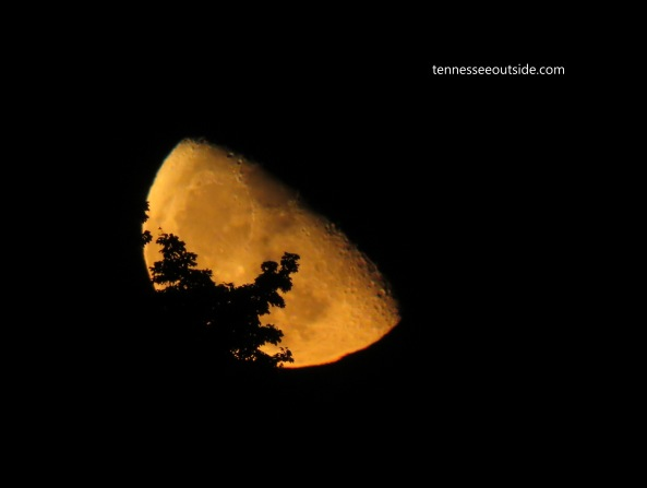 waning-gibbous-moon-almost-last-quarter