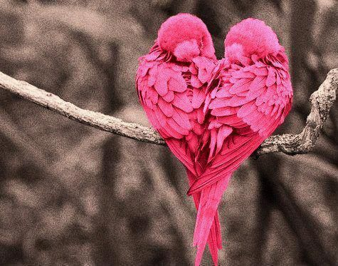 valentine-hearts-pink-lovebirds